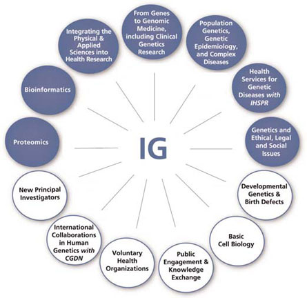 Priority & Planning Committees and Working Group of the IG